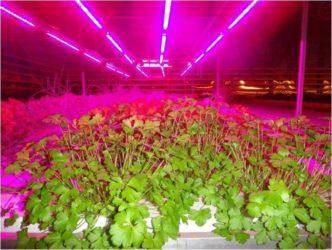 Светодиоды для растений какие выбрать?